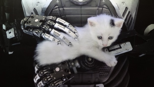 The Talos Principle robot with cat