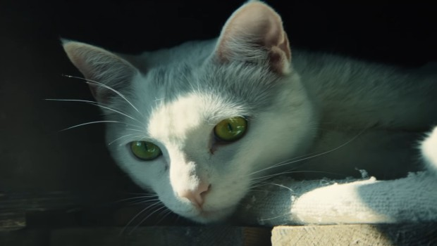 The white cat from the Ghost Recon Wildlands Red Dot trailer